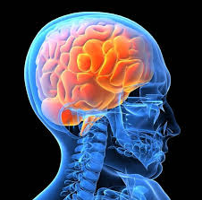 enhance your human brain